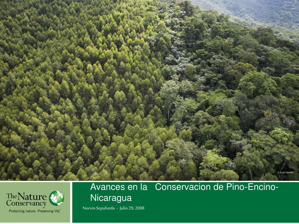 Avances en la   Conservacion de Pino-Encino- Nicaragua