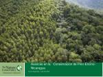 avances en la conservacion de pino encino nicaragua