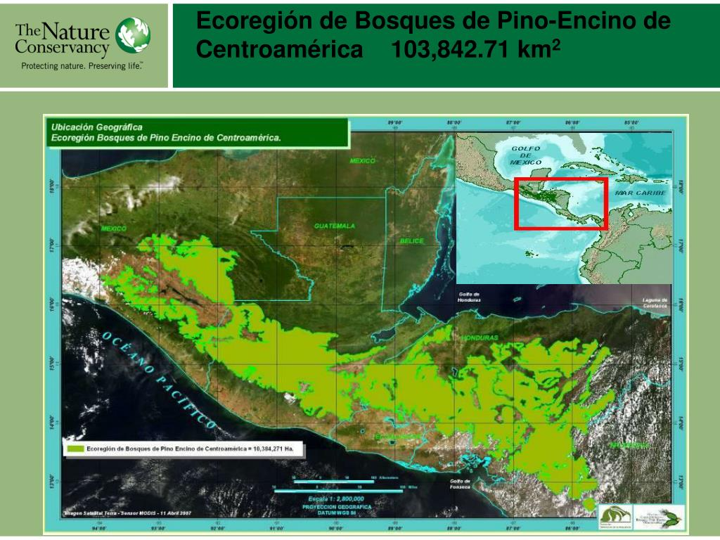 Ecoregión de Bosques de Pino-Encino de Centroamérica    103,842.71 km