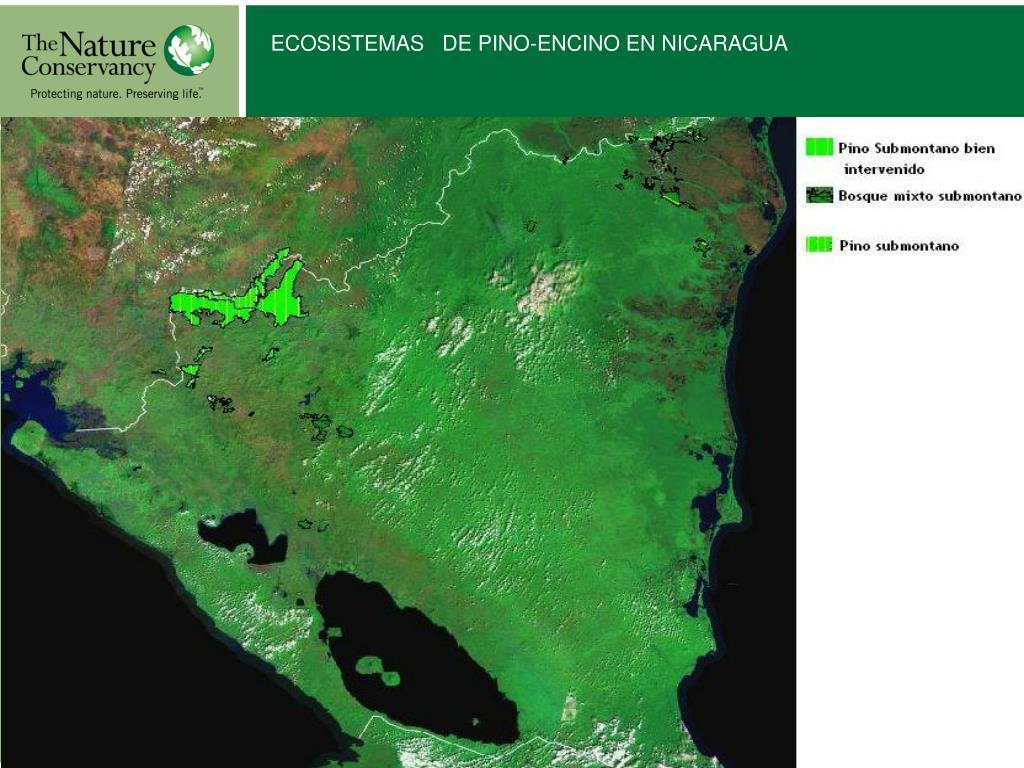 ECOSISTEMAS   DE PINO-ENCINO EN NICARAGUA