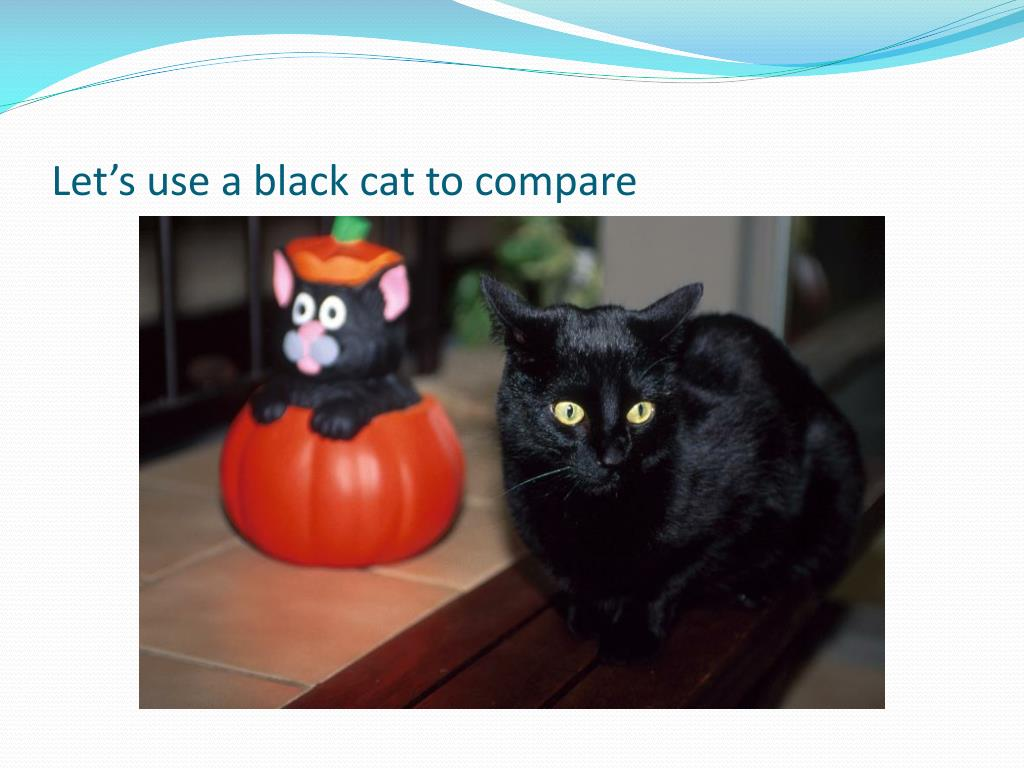 Let's use a black cat to compare