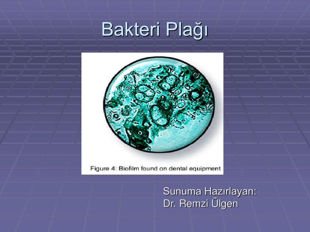 Bakteri Plağı