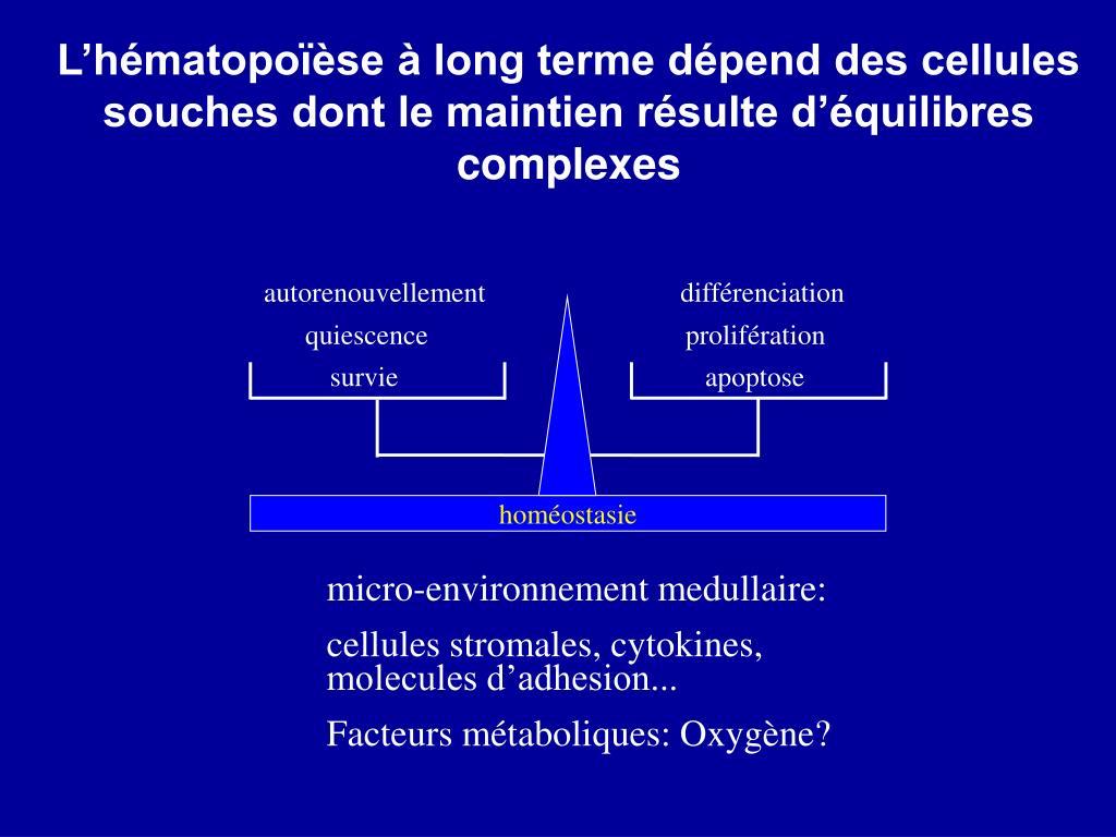 L'hématopoïèse à long terme dépend des cellules souches dont le maintien résulte d'équilibres complexes