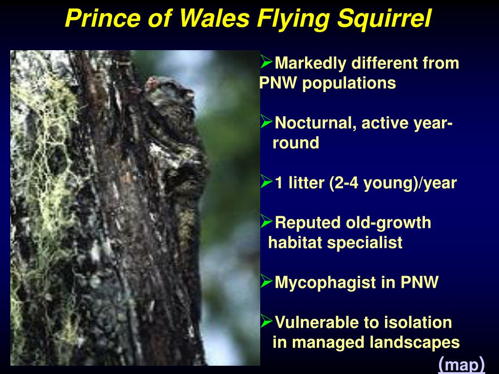 Prince of Wales Flying Squirrel