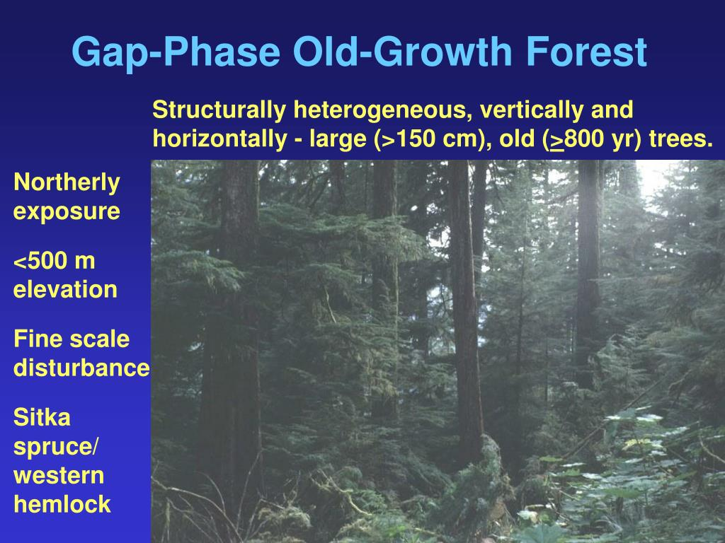 Gap-Phase Old-Growth Forest
