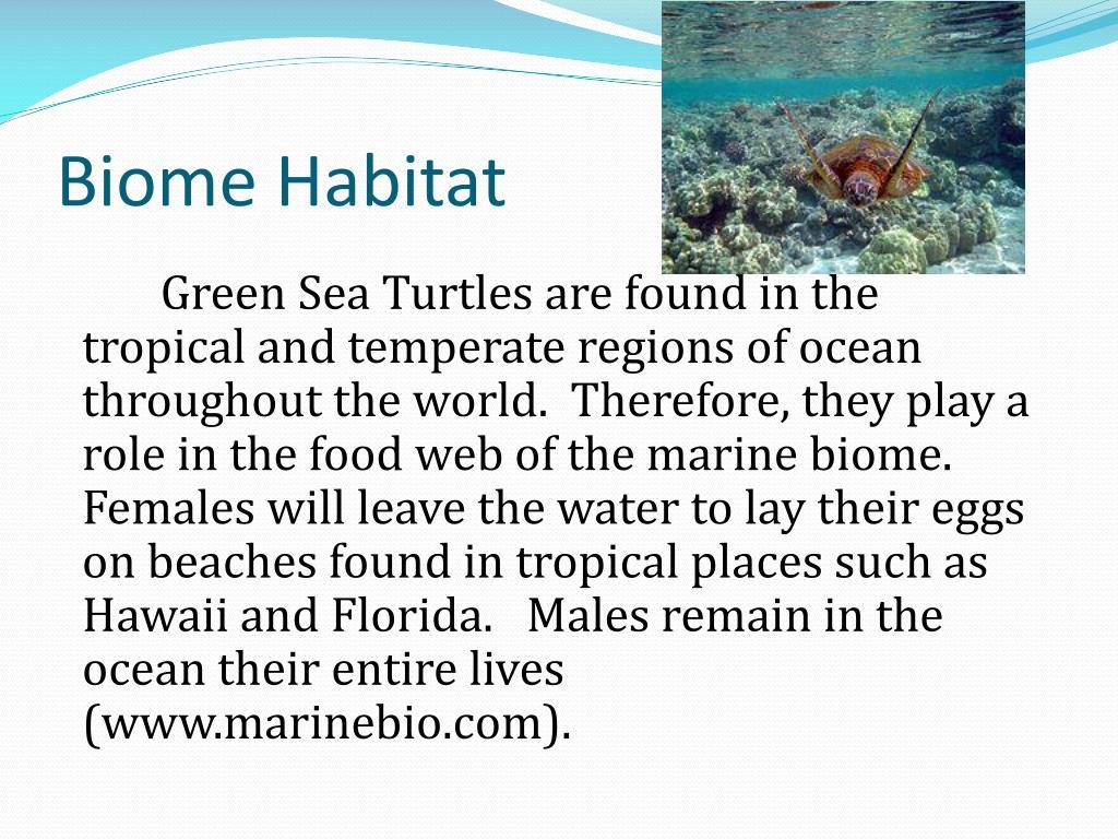 Biome Habitat