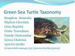 green sea turtle taxonomy