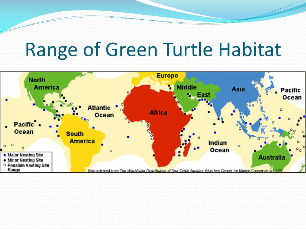Range of Green Turtle Habitat