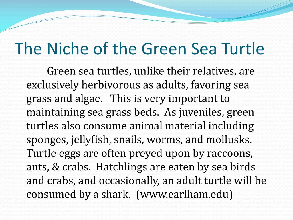 The Niche of the Green Sea Turtle