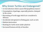 why green turtles are endangered