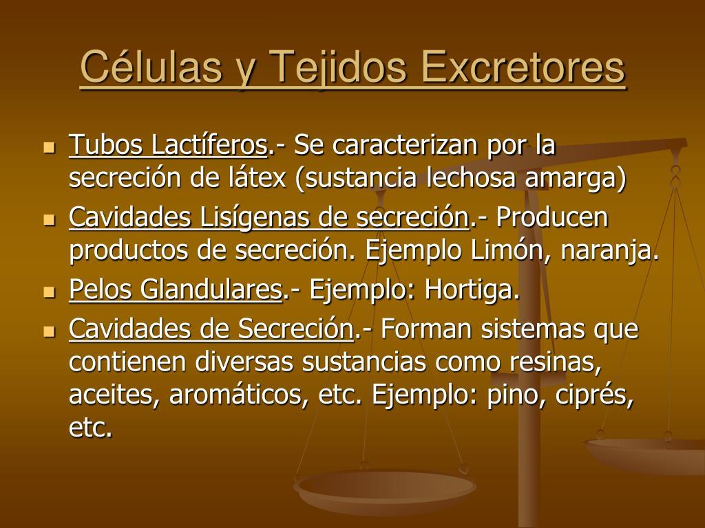 Células y Tejidos Excretores