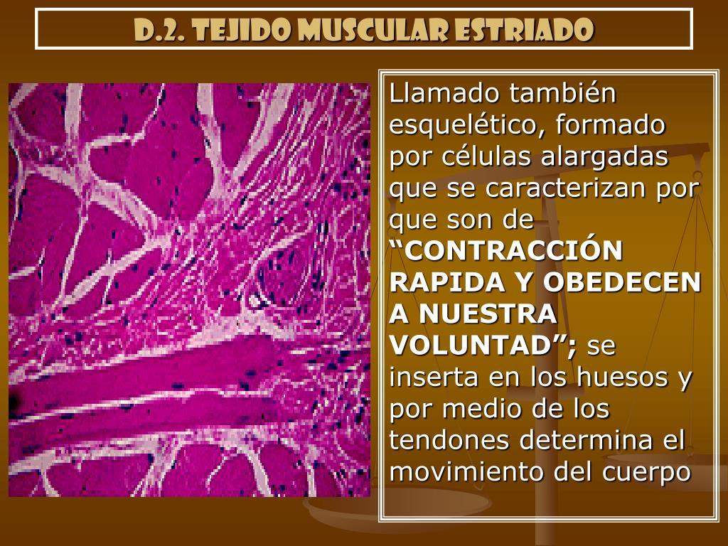 d.2. tejido muscular estriado