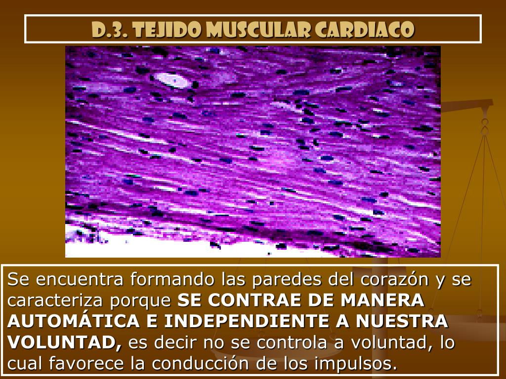 d.3. tejido muscular cardiaco