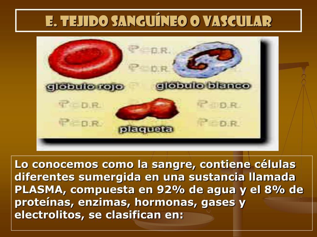 e. Tejido sanguíneo o vascular