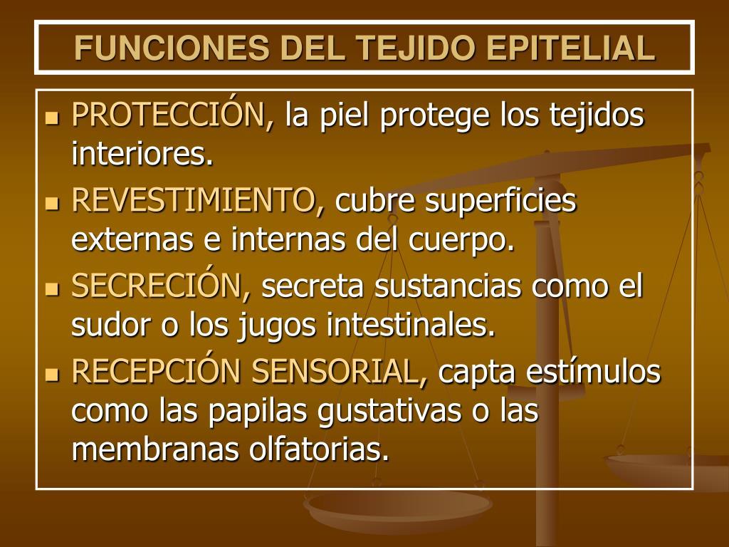 FUNCIONES DEL TEJIDO EPITELIAL