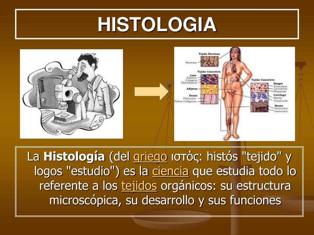 HISTOLOGIA