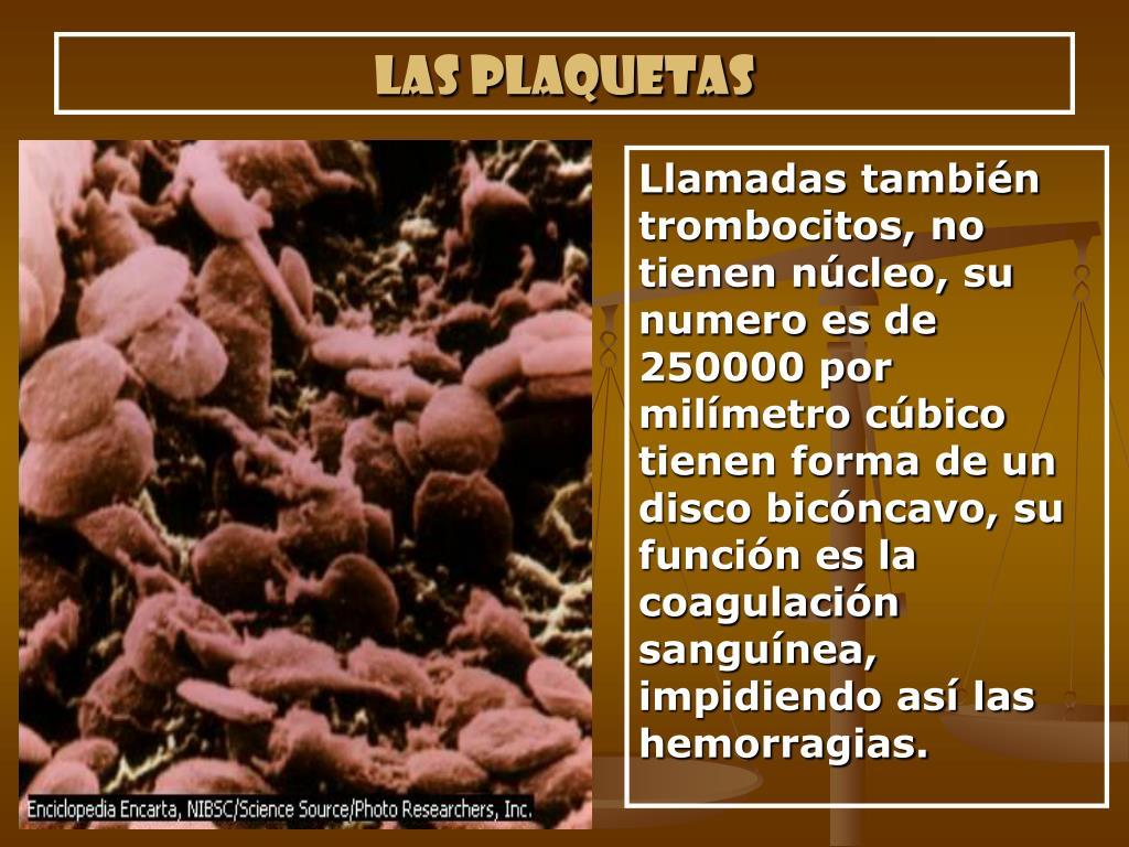 Las plaquetas