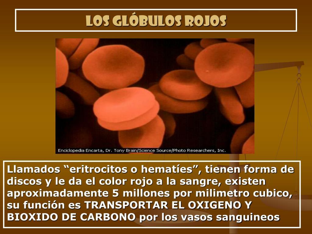 Los glóbulos rojos