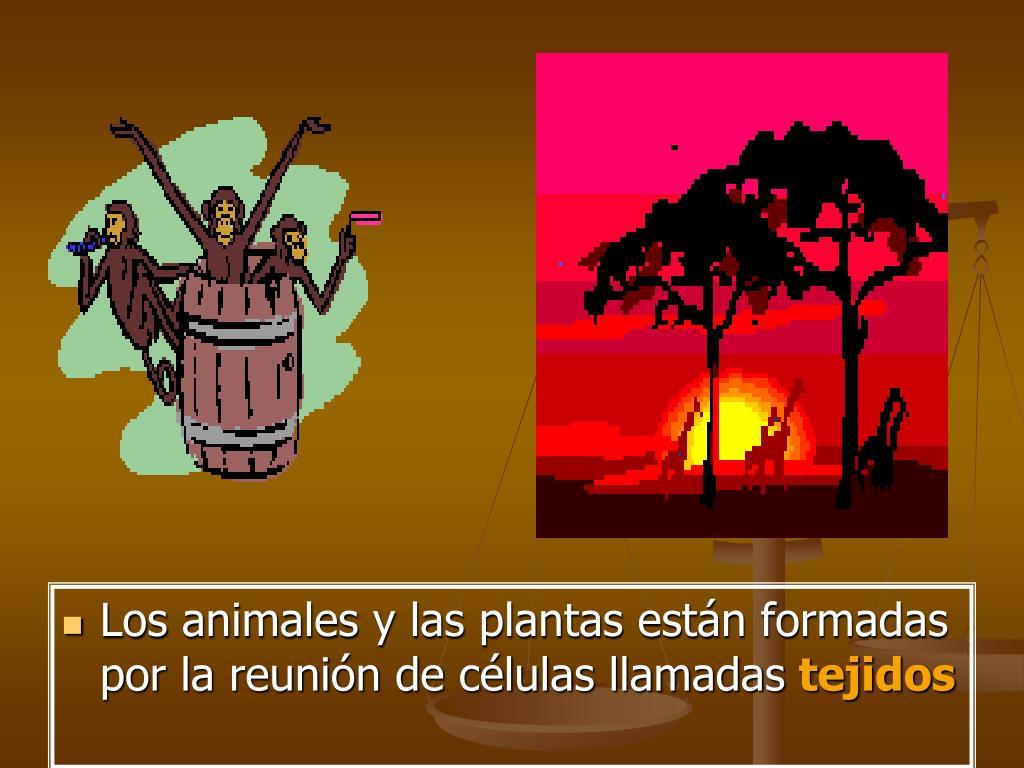 Los animales y las plantas están formadas por la reunión de células llamadas