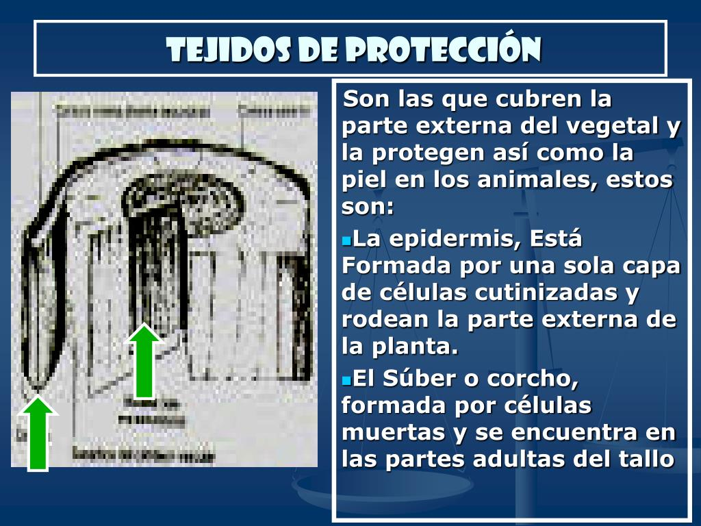 TEJIDOS DE PROTECCIÓN