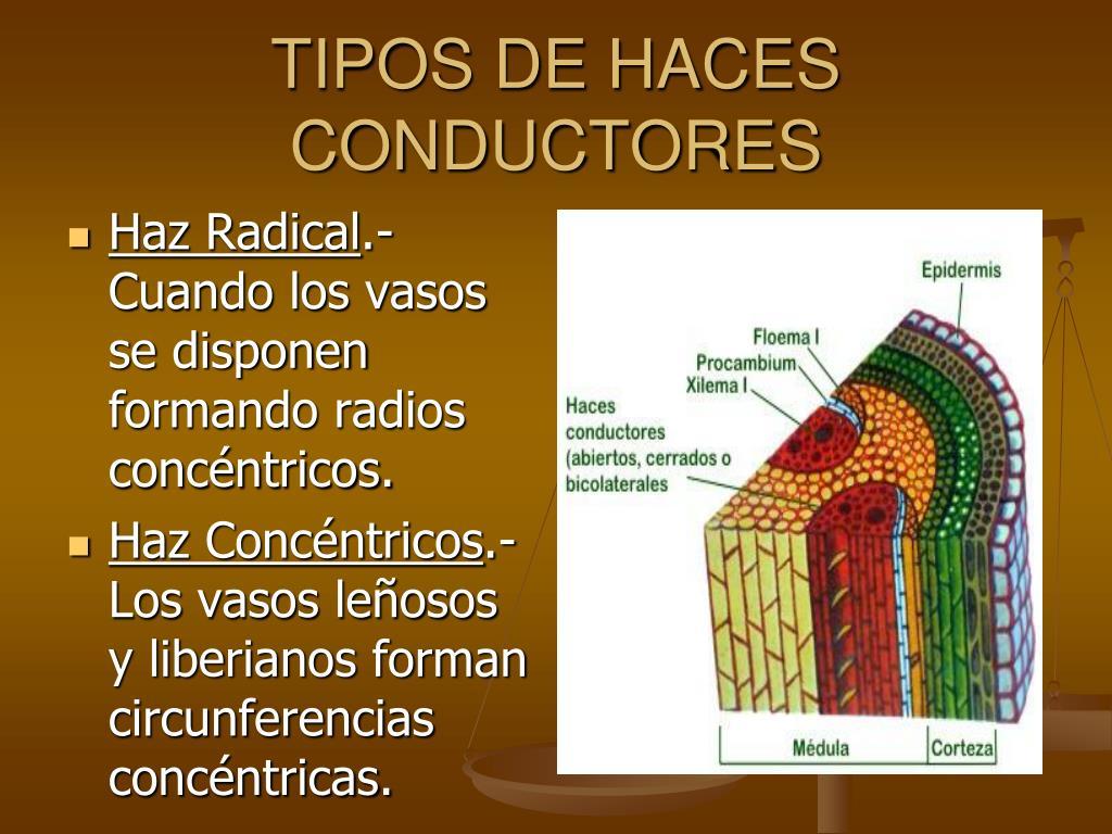 TIPOS DE HACES CONDUCTORES