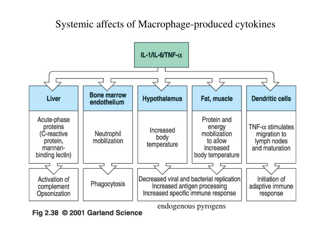 Systemic affects of Macrophage-produced cytokines