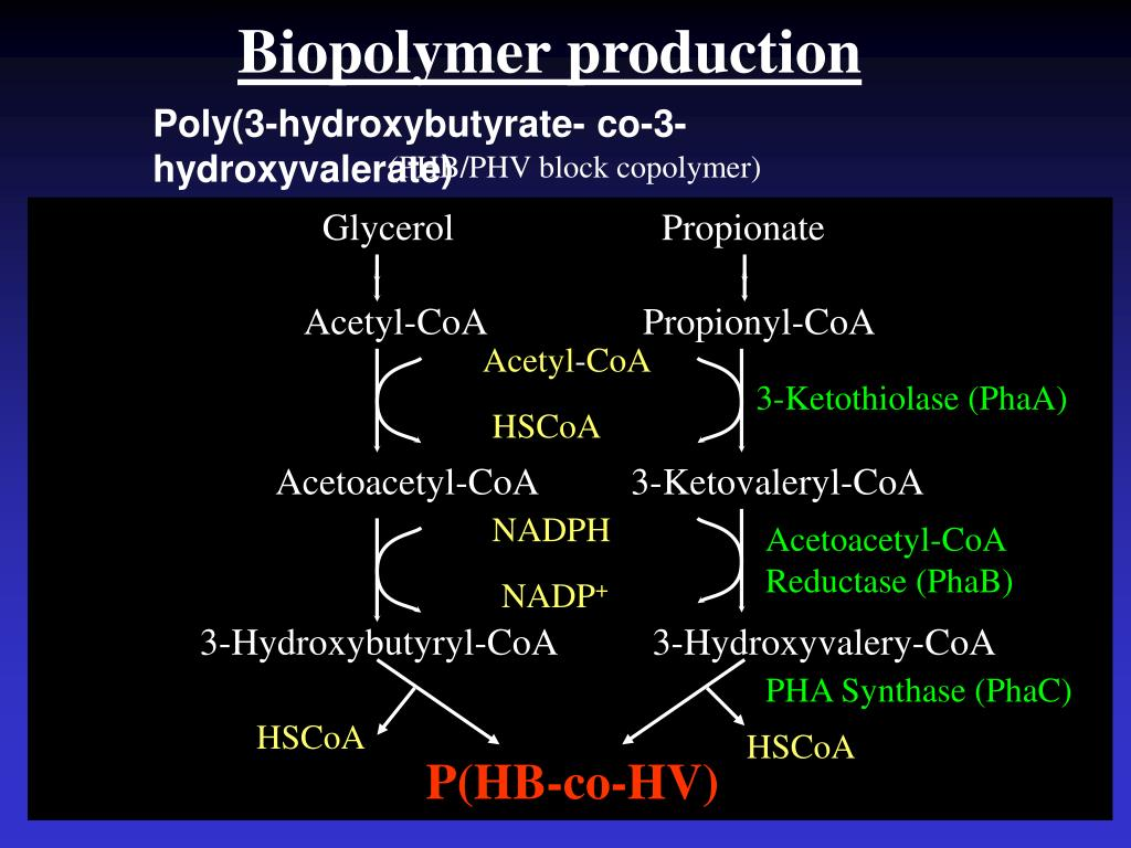 Biopolymer production