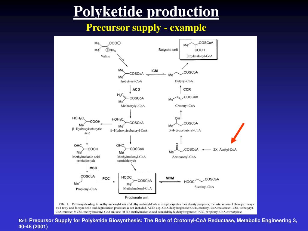Polyketide production