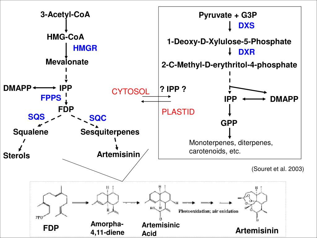 3-Acetyl-CoA