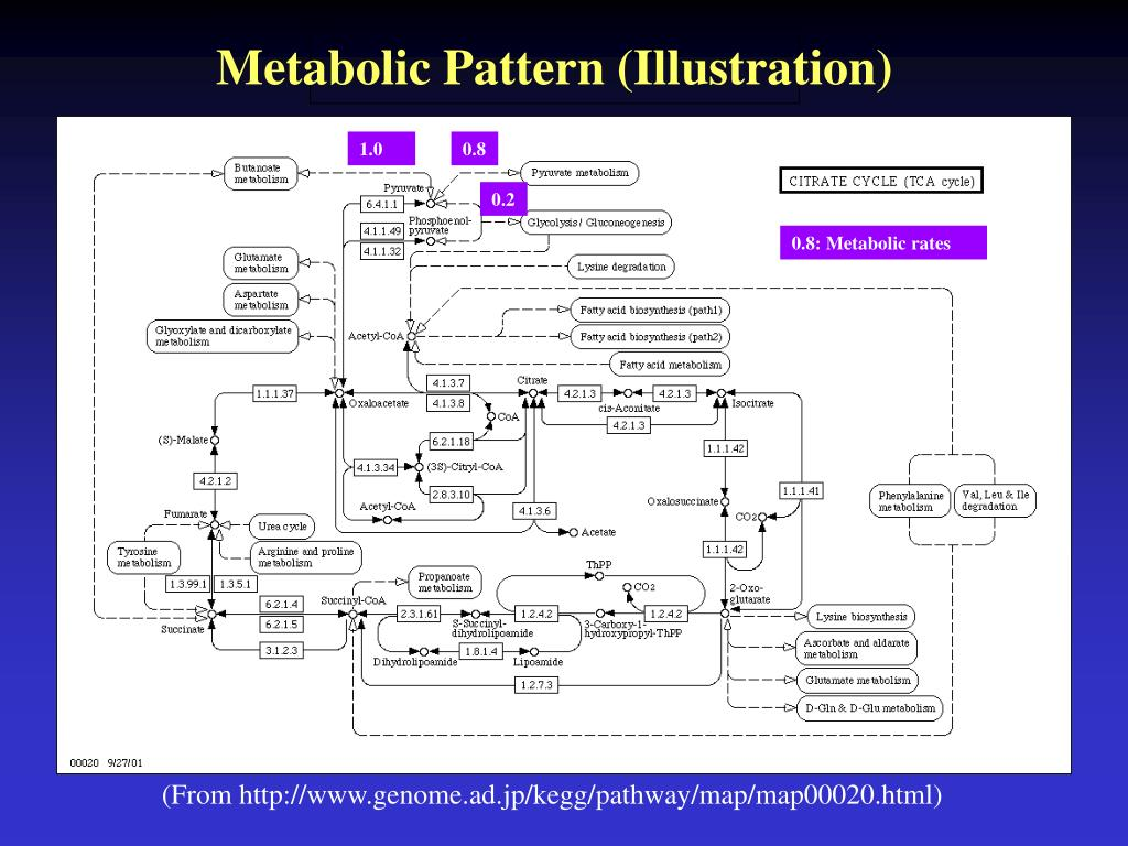 Metabolic Pattern (Illustration)