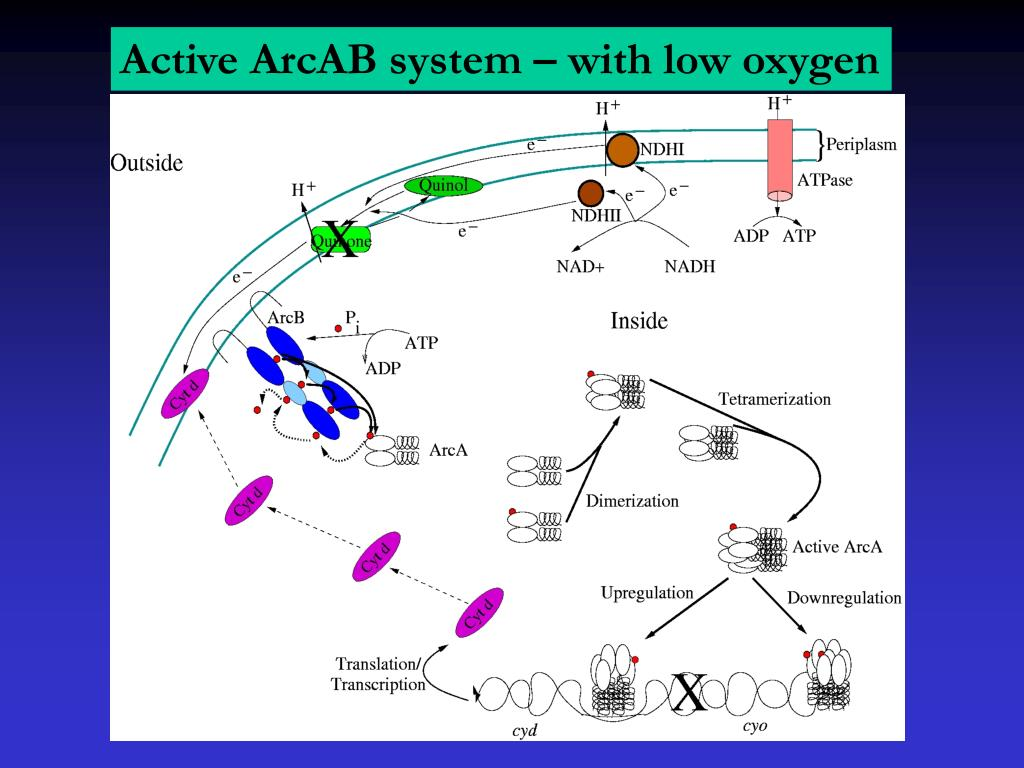 Active ArcAB system – with low oxygen