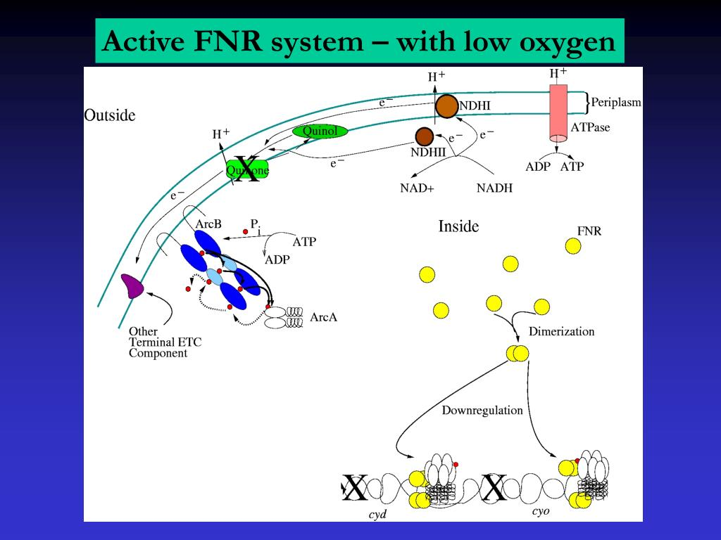 Active FNR system – with low oxygen