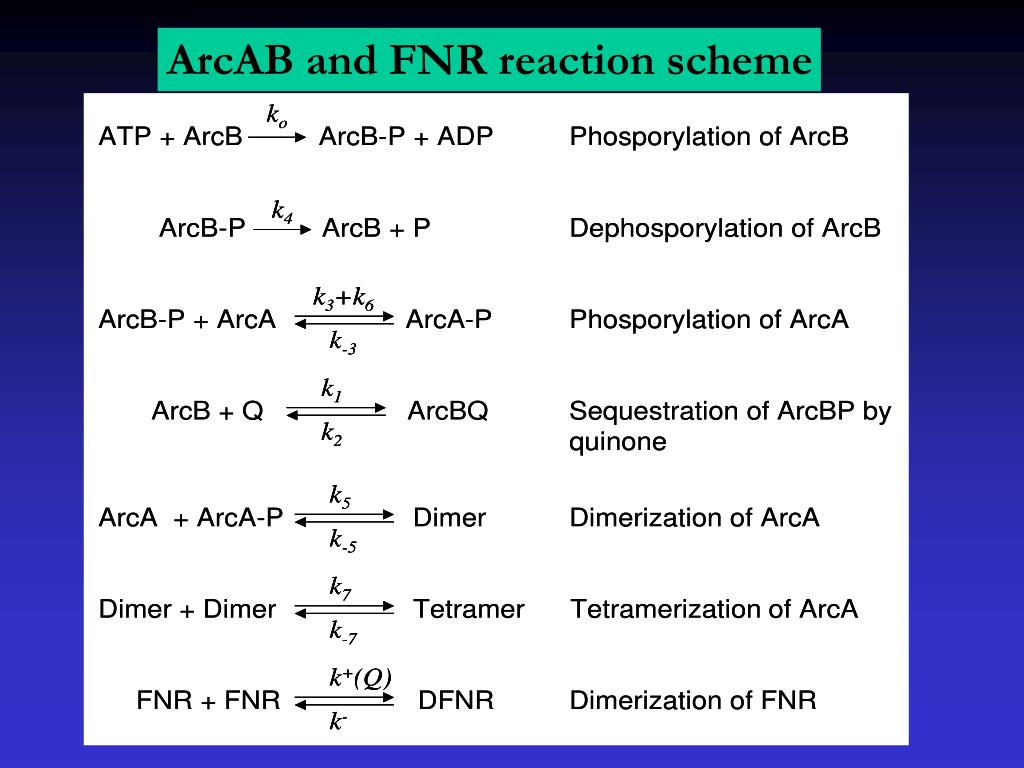 ArcAB and FNR reaction scheme