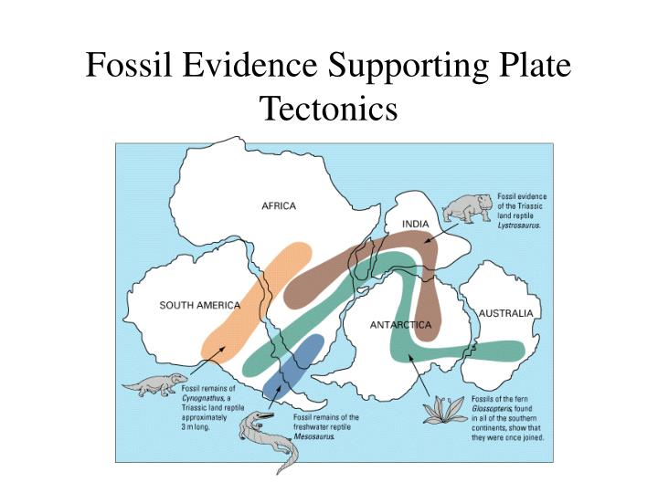 Fossil evidence supporting plate tectonics