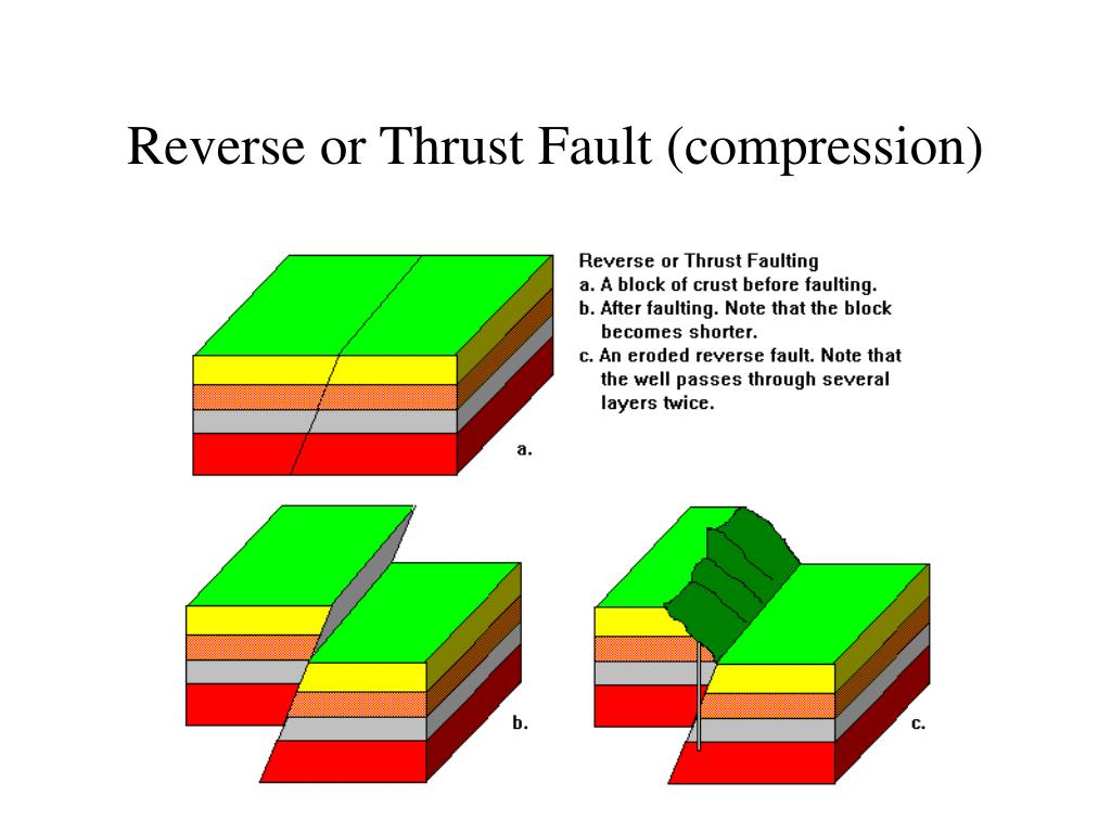 Reverse or Thrust Fault (compression)