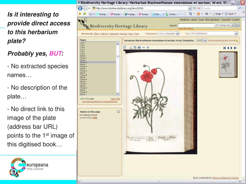 Is it interesting to provide direct access to this herbarium plate?