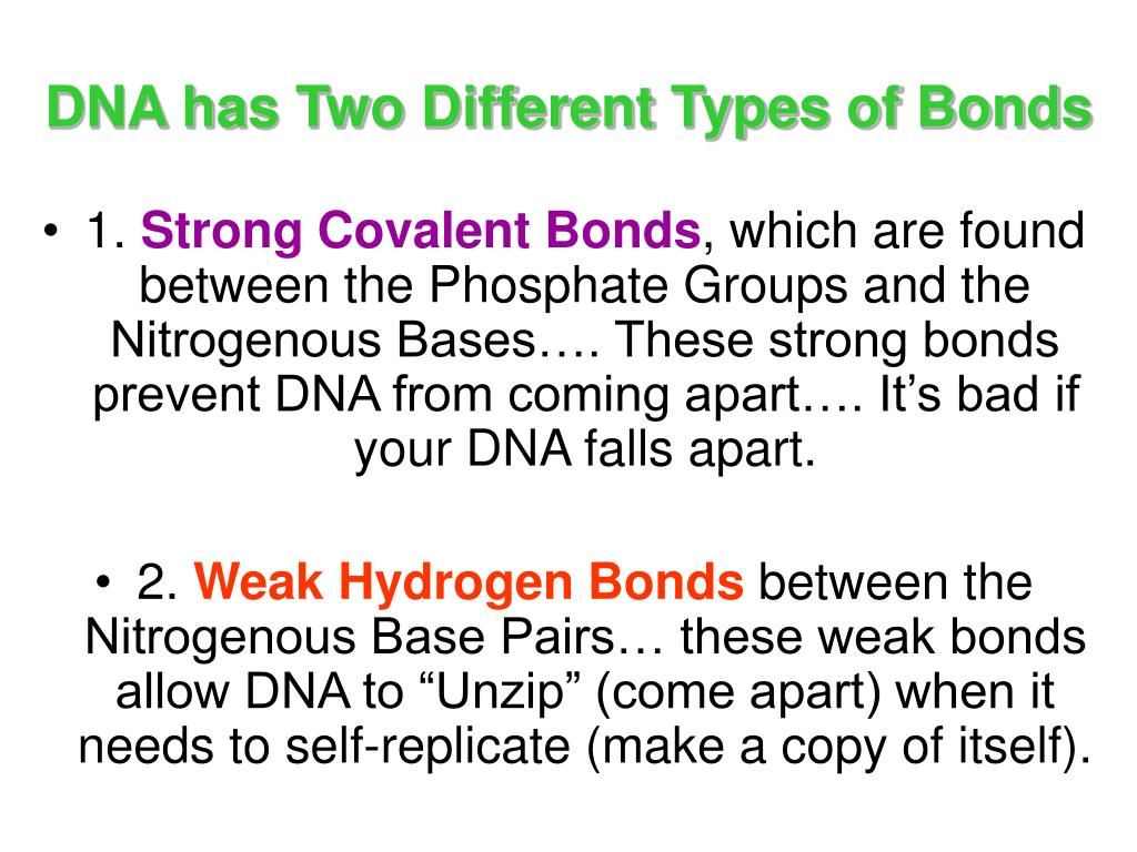DNA has Two Different Types of Bonds