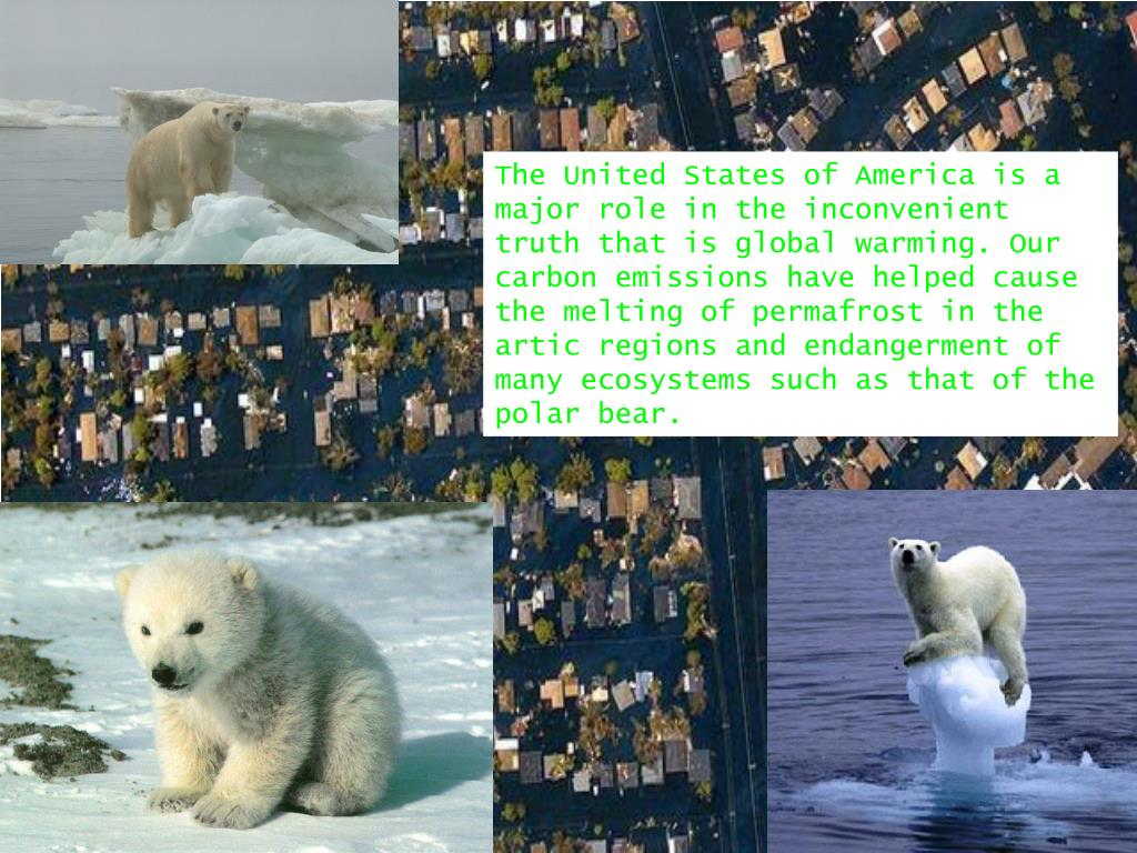 The United States of America is a major role in the inconvenient truth that is global warming. Our carbon emissions have helped cause the melting of permafrost in the artic regions and endangerment of many ecosystems such as that of the polar bear.