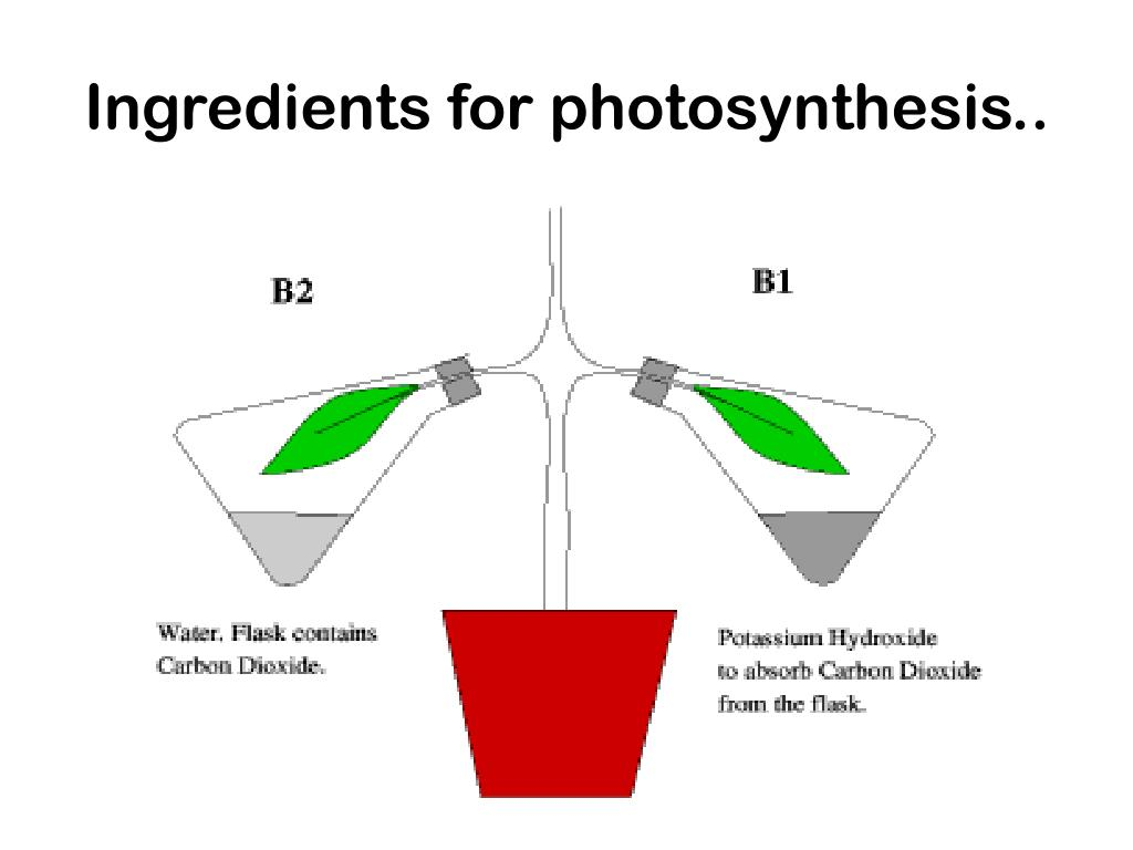 Ingredients for photosynthesis..