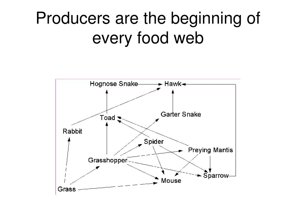 Producers are the beginning of every food web