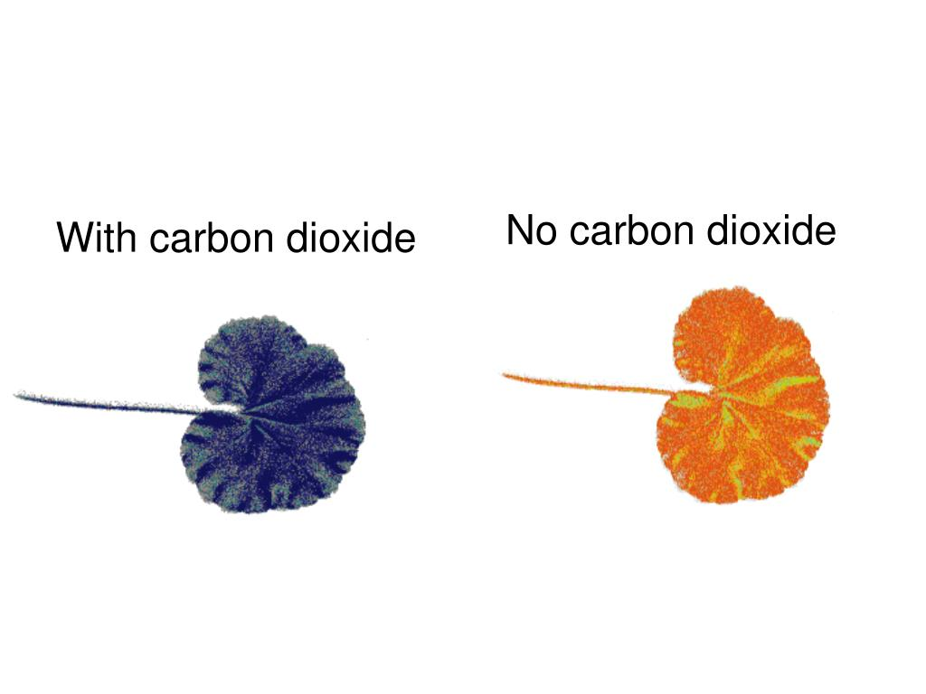 With carbon dioxide