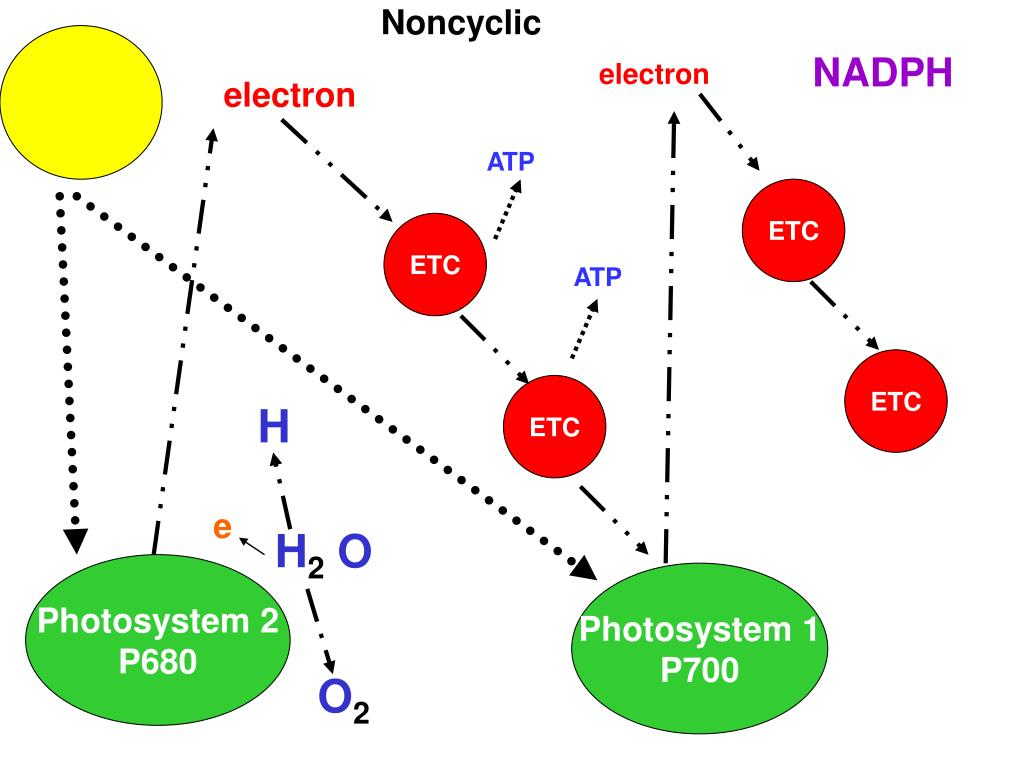 Noncyclic