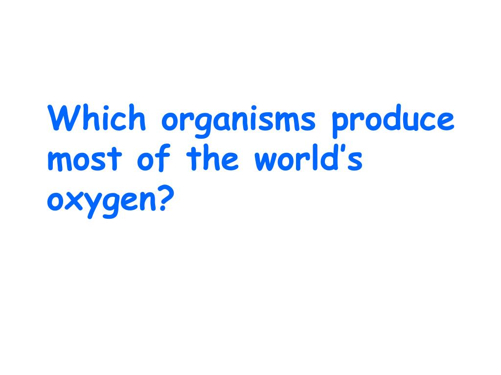 Which organisms produce