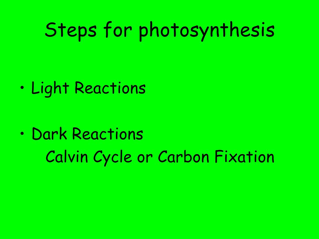 Steps for photosynthesis