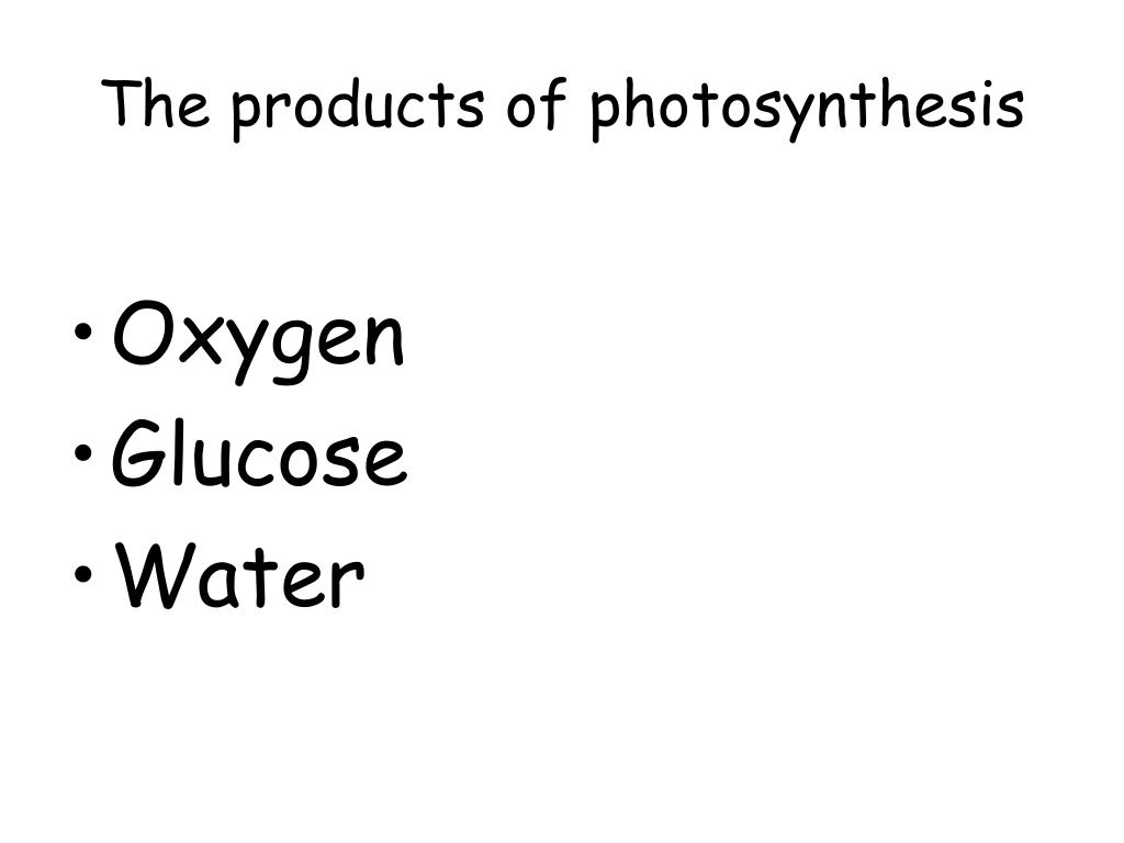 The products of photosynthesis