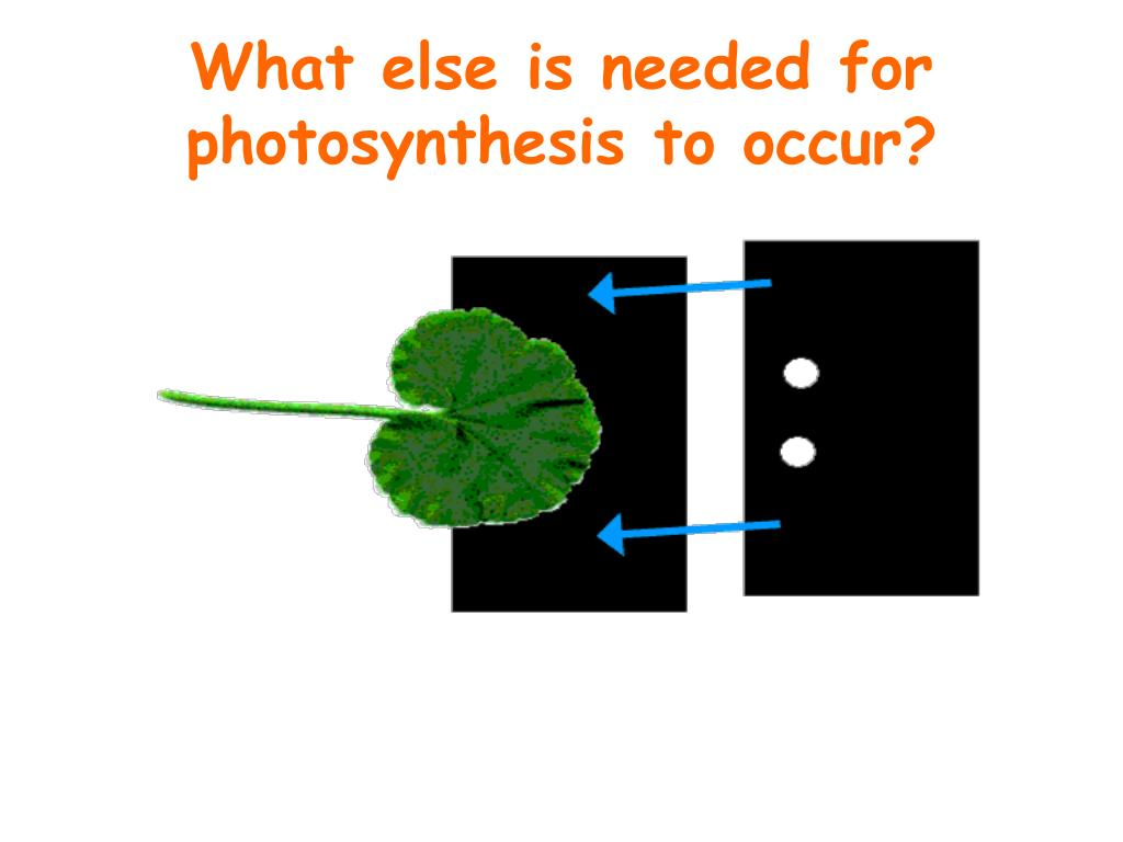 What else is needed for photosynthesis to occur?