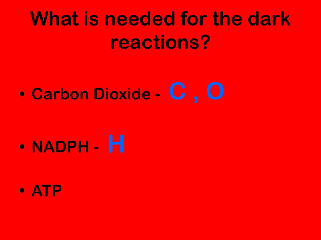 What is needed for the dark reactions?