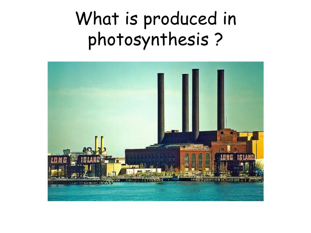 What is produced in photosynthesis ?