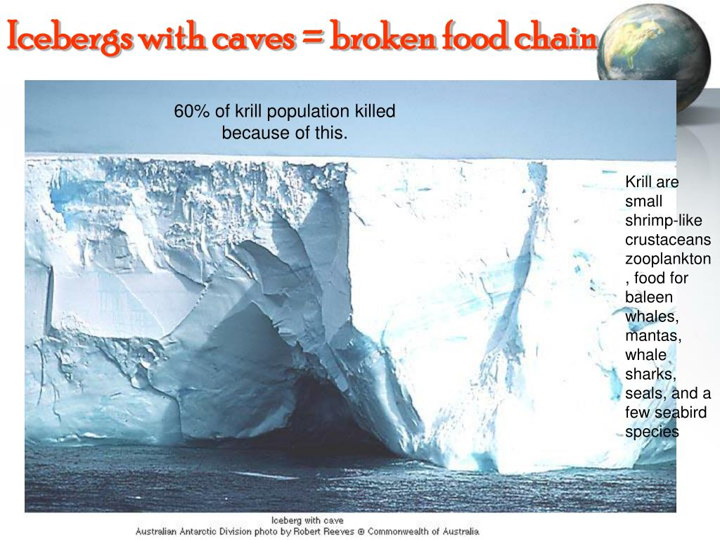 Icebergs with caves = broken food chain
