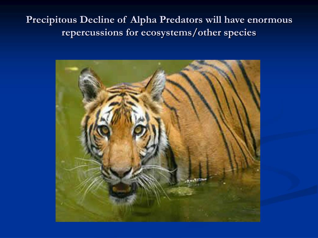 Precipitous Decline of Alpha Predators will have enormous repercussions for ecosystems/other species